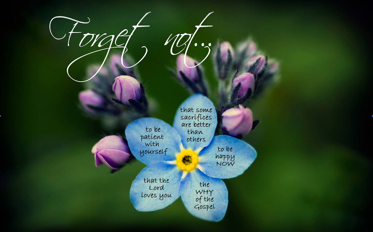 Pics Photos - Forget Me Not Flower Tattoo Funny Quotes Backgrounds